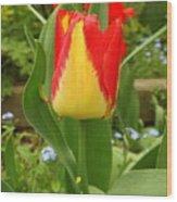 Mister Tulip Waving Salute Wood Print