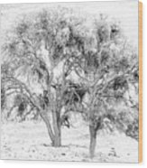 Mistletoe Tree In Black And  White Wood Print