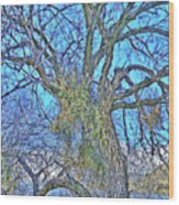 Mistletoe Tree Wood Print