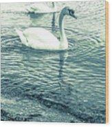 Misty Blue Swans Wood Print