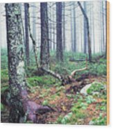 Misty Forest Gaudineer Scenic Area Wood Print