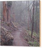 Cloud Forest- Mount Sutro Wood Print