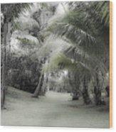Misty Hawaiian Garden Wood Print