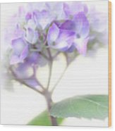 Misty Hydrangea Flower Wood Print