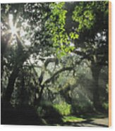 Misty Morning At The Circle B Bar Reserve  Wood Print