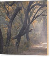 Misty Morning, Bharatpur, 2005 Wood Print