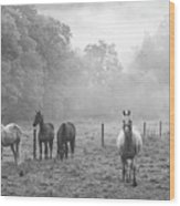 Misty Morning Horses Wood Print