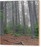 Misty Morning In An Algonquin Forest Wood Print