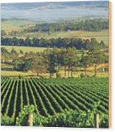 Misty Morning In Yarra Valley Vineyards Near Healesville, Victoria, Australia Wood Print