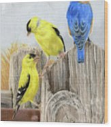 Misty Morning Meadow- Goldfinches And Bluebird Wood Print