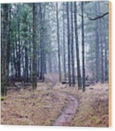 Misty Morning Trail In The Woods Wood Print