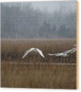 Misty Mute Swans Soaring South Jersey Wetlands Wood Print