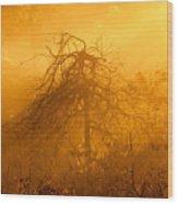 Misty Swamp Sunrise Wood Print