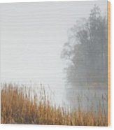 Misty Trees And Reeds Wood Print
