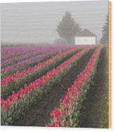 Misty Tulip Fields Iv Wood Print