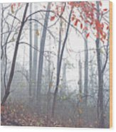 Misty Woodland Showing The Last Fall Color Wood Print