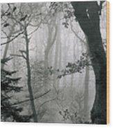 Misty Woods, Juniper Wood Print