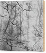 Misty Woods, Whitley Mill Wood Print
