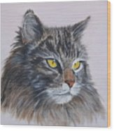 Mitze Maine Coon Cat Wood Print