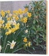 Mixed Daffodils Wood Print