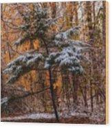 Mixed Seasons Wood Print