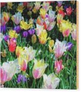 Mixed Tulips In Bloom  Wood Print