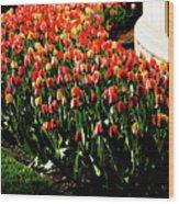 Mixed Tulips Wood Print