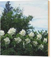 Mock Orange Blossoms Wood Print