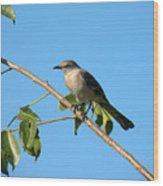 Mocking Bird Out On A Limb Wood Print