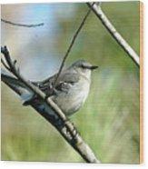 Mockingbird In Green Wood Print