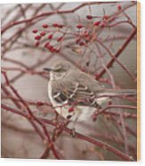Mockingbird In Winter Rose Bush Wood Print