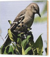Mockingbird On Berries Wood Print
