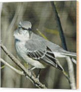 Mockingbird Side Glance Wood Print