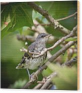 Mockingbird Youngster Wood Print