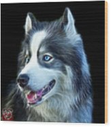 Modern Siberian Husky Dog Art - 6024 - Bb Wood Print
