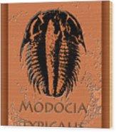 Modocia Typicalis Fossil Trilobite Wood Print
