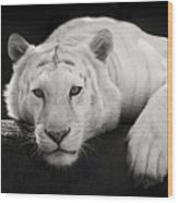 Mohan The White Tiger Wood Print