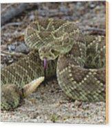 Mohave Green Rattlesnake Striking Position 3 Wood Print