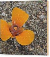 Mojave Orange Wood Print