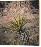 Mojave Yucca Wood Print