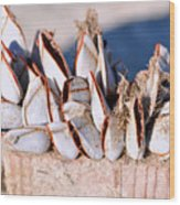 Mollusks On Wood Plank Wood Print