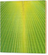 Molokai Palm Fan Wood Print