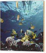 Molokini Snorkeling Couple Wood Print