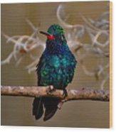 Molting Hummingbird Wood Print