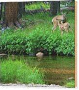 Mom And Baby Deer Wood Print