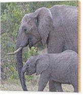 Mom And Baby Elephant Wood Print
