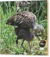 Mom And Baby Limpkin Wood Print