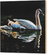 Mom And Baby Swan Wood Print