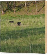 Mom And Cub Wood Print
