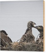 Mom And Little Eaglets Wood Print